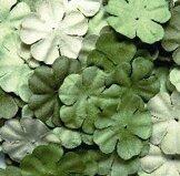BLOM15 gröna
