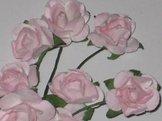 Ros 101 Rosa rosor