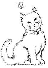 OM783 F Katt