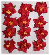 GAR003 Gardenia Red