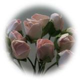ROS 125 Rosa knopp