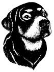 OM2135 C Hund
